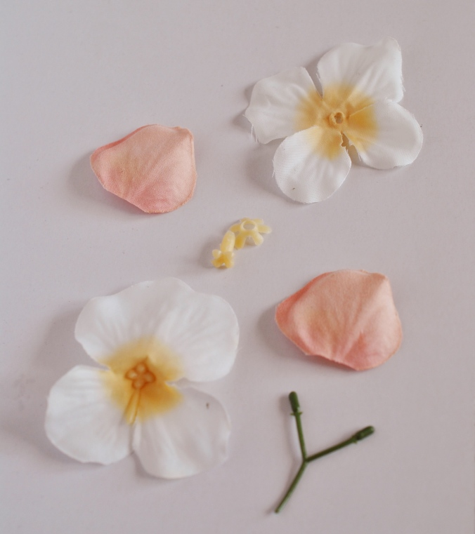flower disected